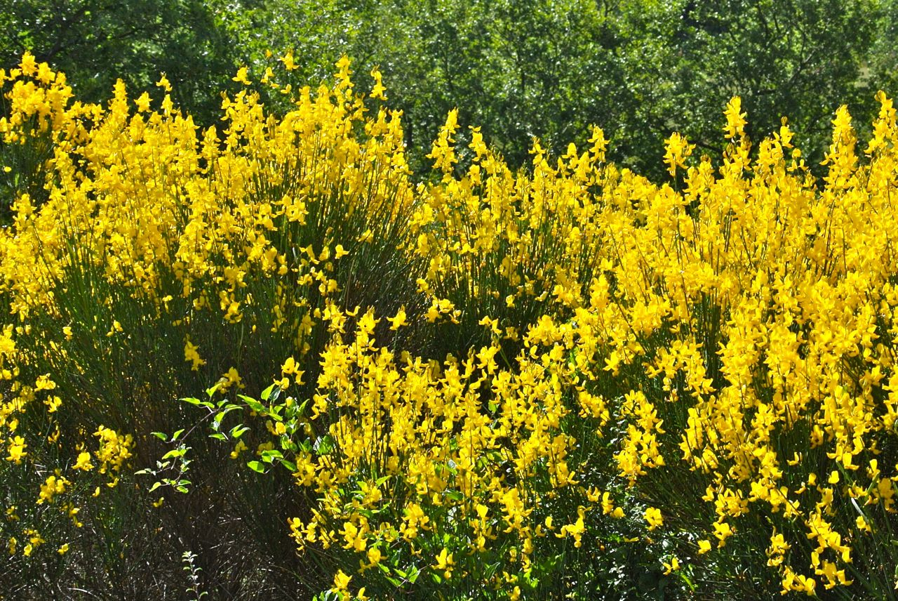 Sunday Stills Yellow Flowers Tails From Provence